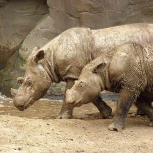 CFF_Sumantran Rhino