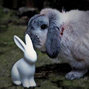 CFF_Velveteen Rabbit